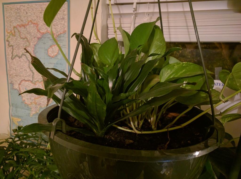 Plant17