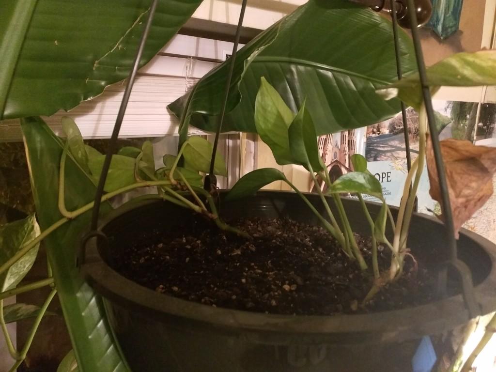 Plant18
