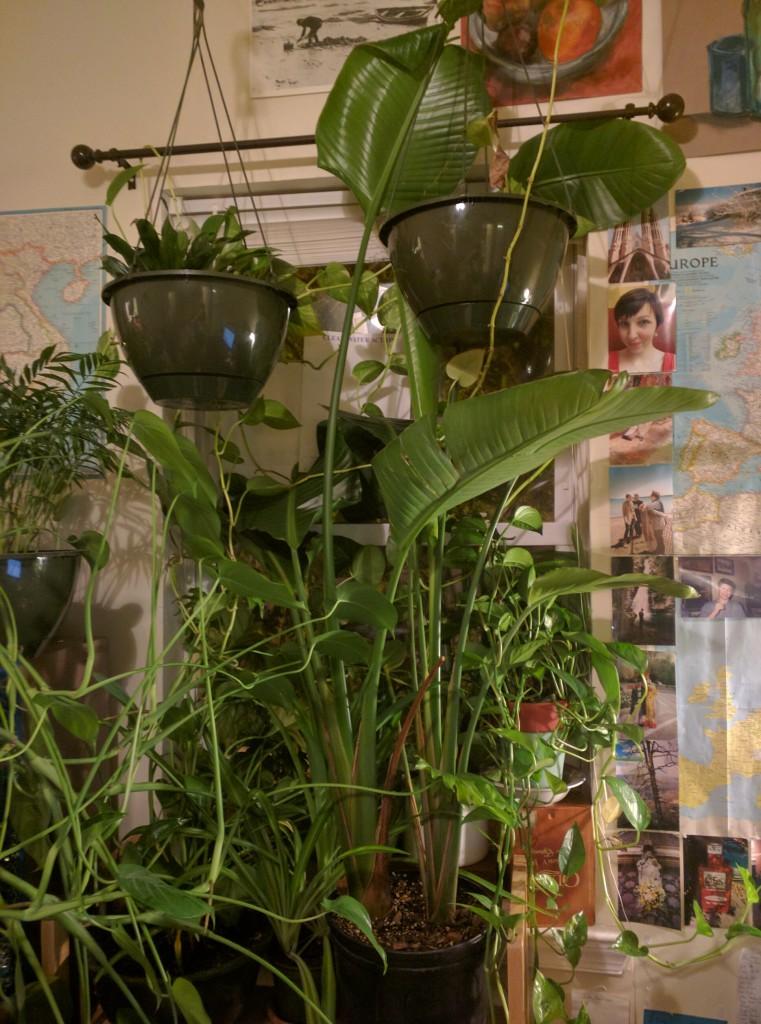 Plant19