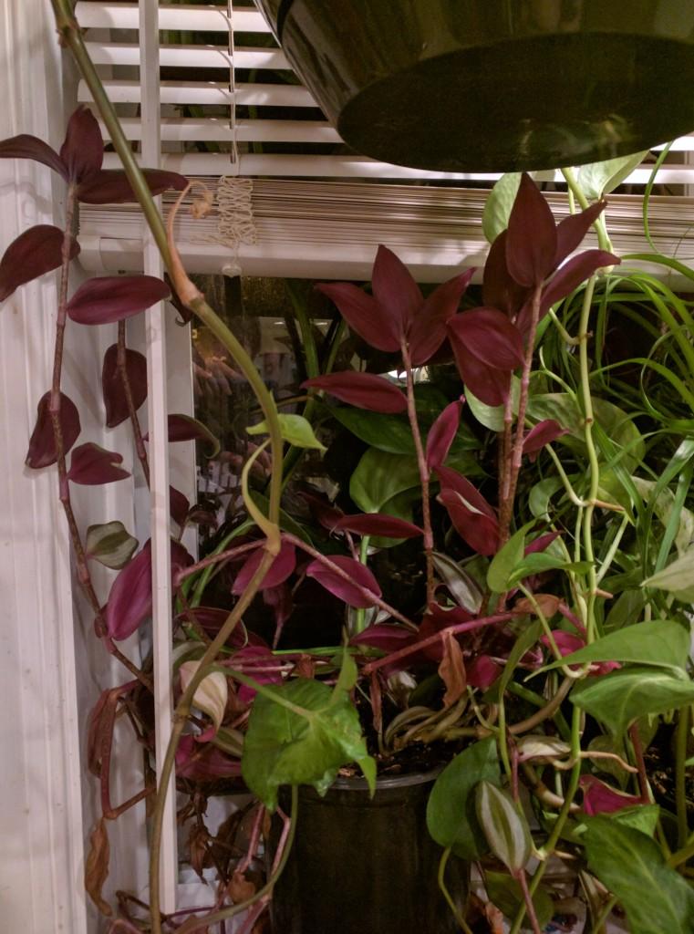 Plant26