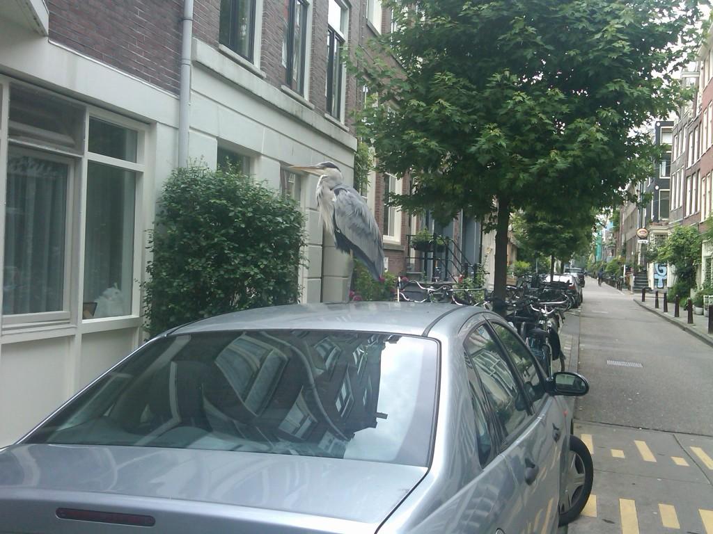 Amsterdam-Bird